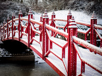 Botanical-Garden-after-Snowfall-8