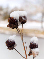 Botanical-Garden-after-Snowfall-9