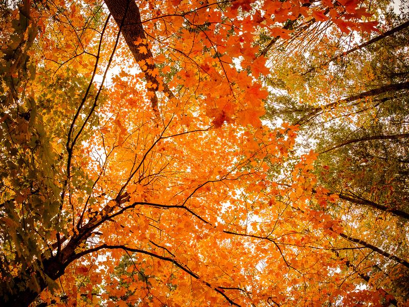 2017-Fall-Colors
